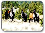 Kiger Mustang Group