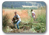 City of Eugene restoration staff work on a Bureau of Land Management restoration project in the West Eugene Wetlands.