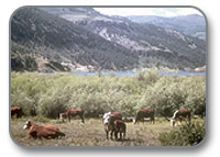 """Livestock Grazing on Public Lands: The Perils of """"Multiple Use"""""""