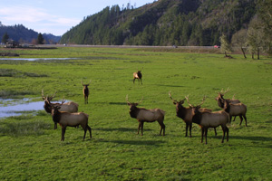 Dean Creek Elk Viewing Area