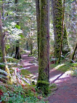 Susan Creek Falls Trail Details Oregon Washington Blm