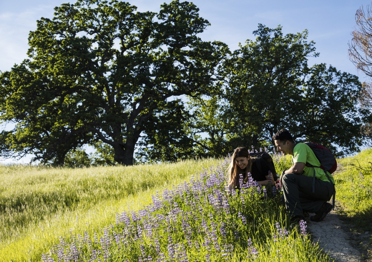 A young man and woman stop to enjoy the wildflowers along the trail at Berryessa Snow Mountain National Monument in California. Photo by Bob Wick, BLM.