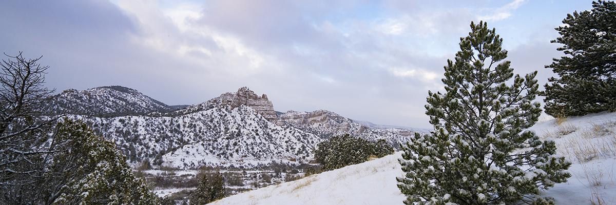 New Mexico Christmas Tree Permits - New Mexico - Christmas Tree Permits BUREAU OF LAND MANAGEMENT
