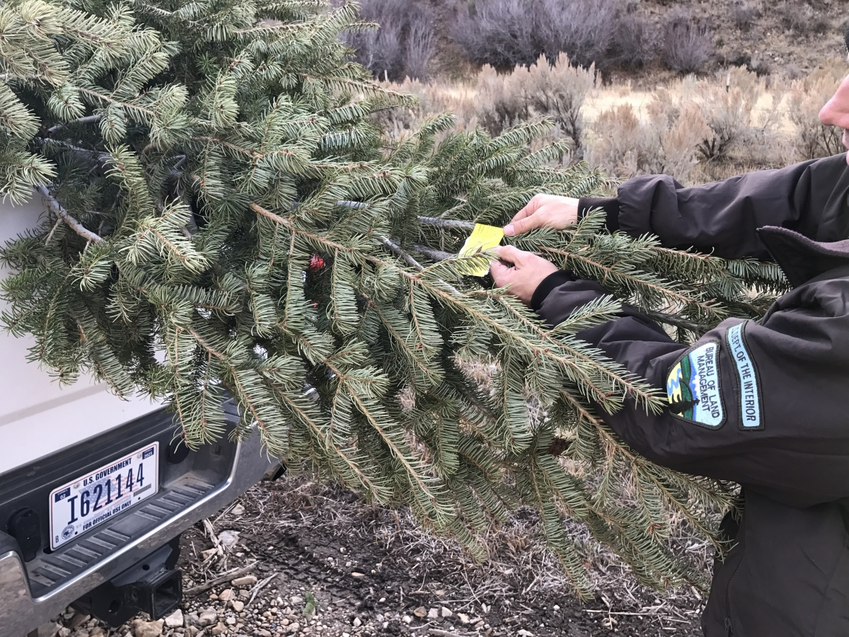 Idaho Christmas Tree Permits | Bureau of Land Management