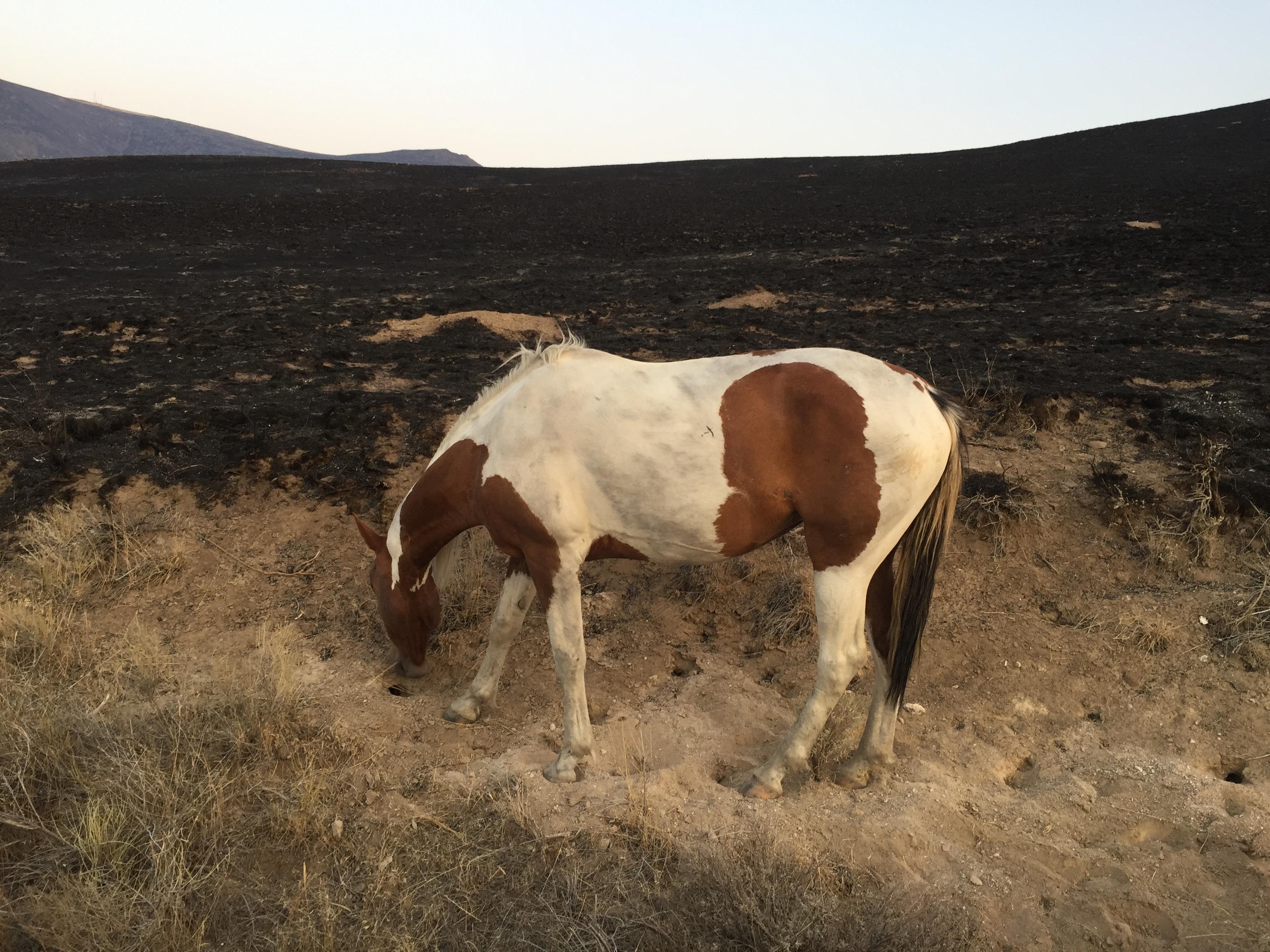 Horse standing on burned landscape