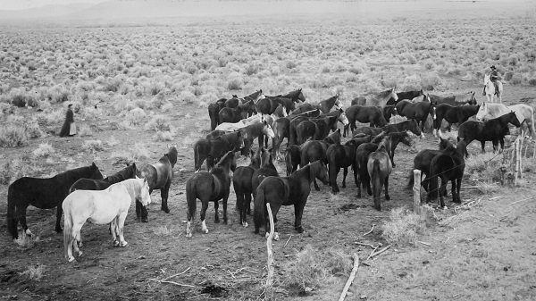 Amado Miranda and unidentified woman with horses on the range. (Image courtesy of the Claire McGill Luce Western History Room, Harney County Library)