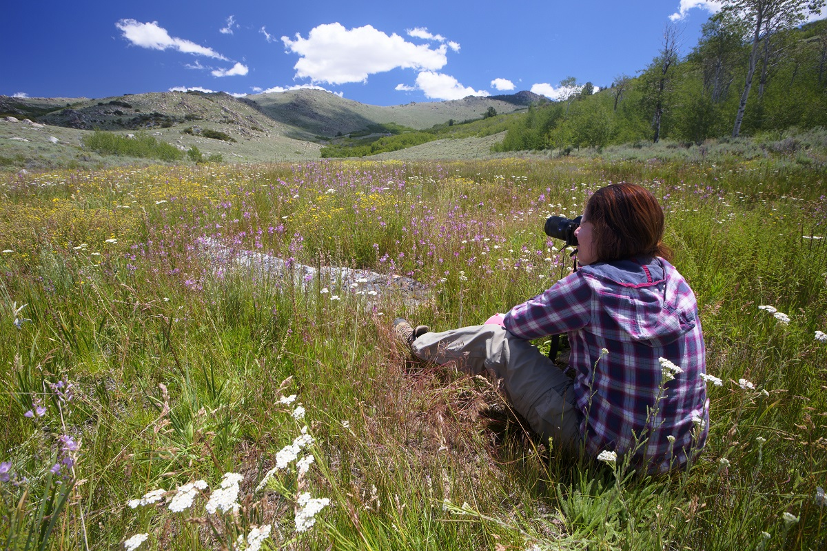 A person sits in a field of flowers.