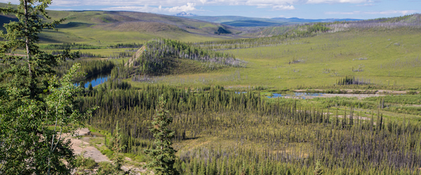 Fortymile wild and scenic river winding its way through marches and forest