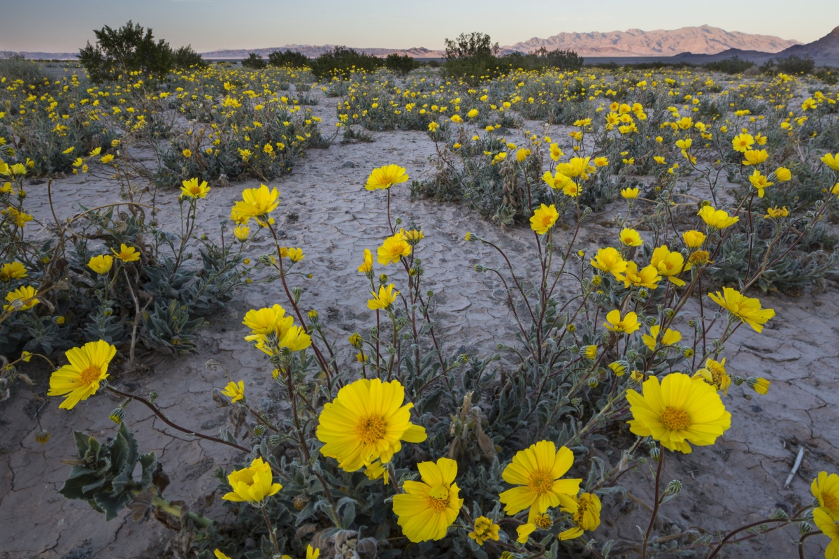 A landscape image of the California desert. BLM photo