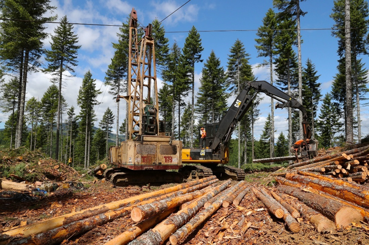 forestry operations in western Oregon
