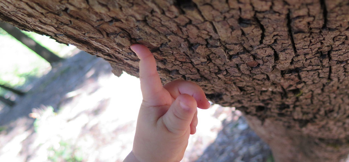 Young boy touches a tree. Photo by Rachel Sowards, BLM