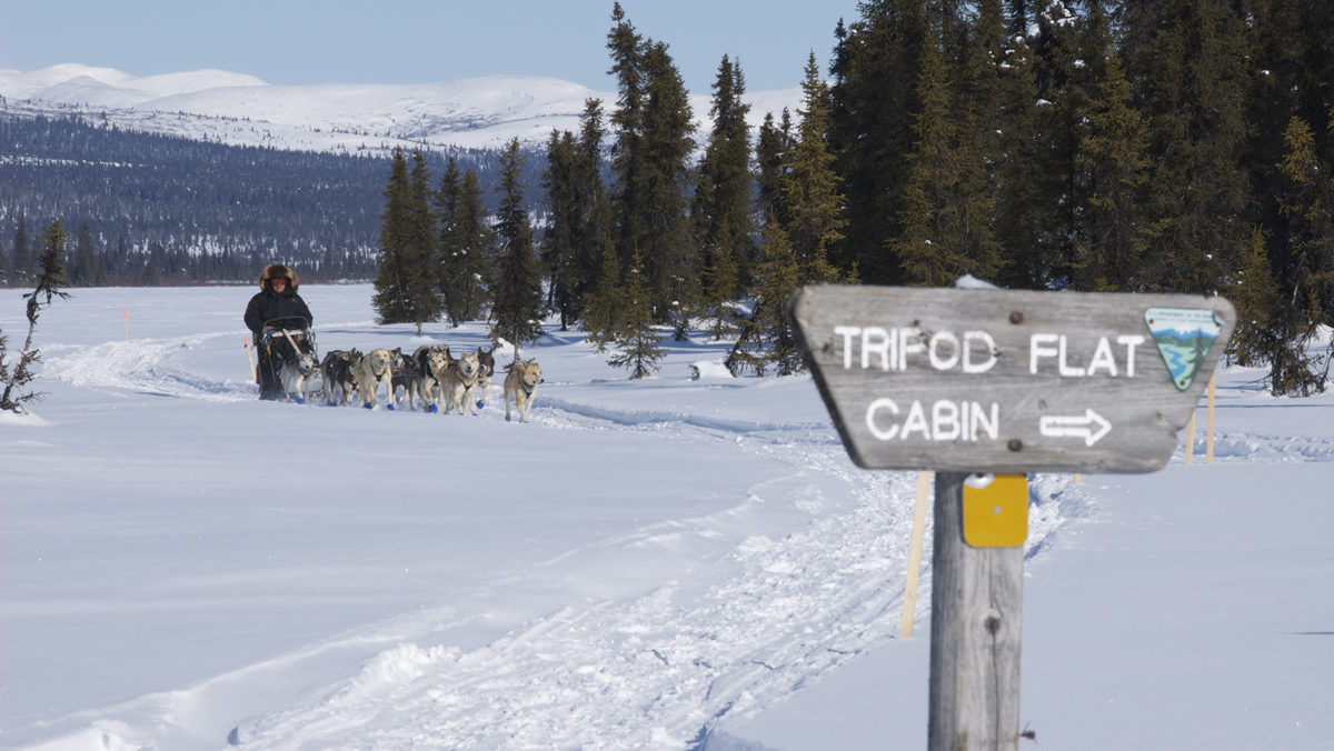 dog musher and dog team on the Iditarod National Historic Trail between Kaltag and Unalakleet