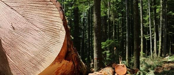 Oregon timber sale site, BLM photo