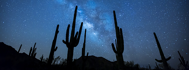 Saguaro cactus and night sky on Sonoran Desert National Monument