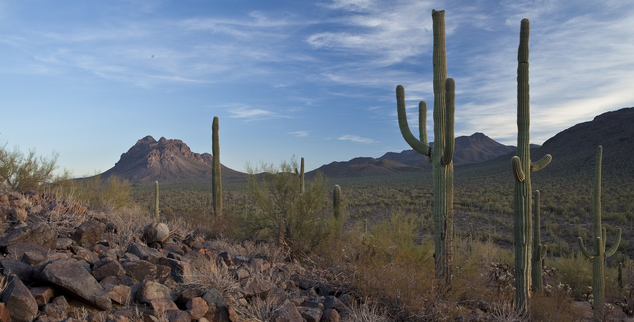 View of the Ironwood Forest National Monument.