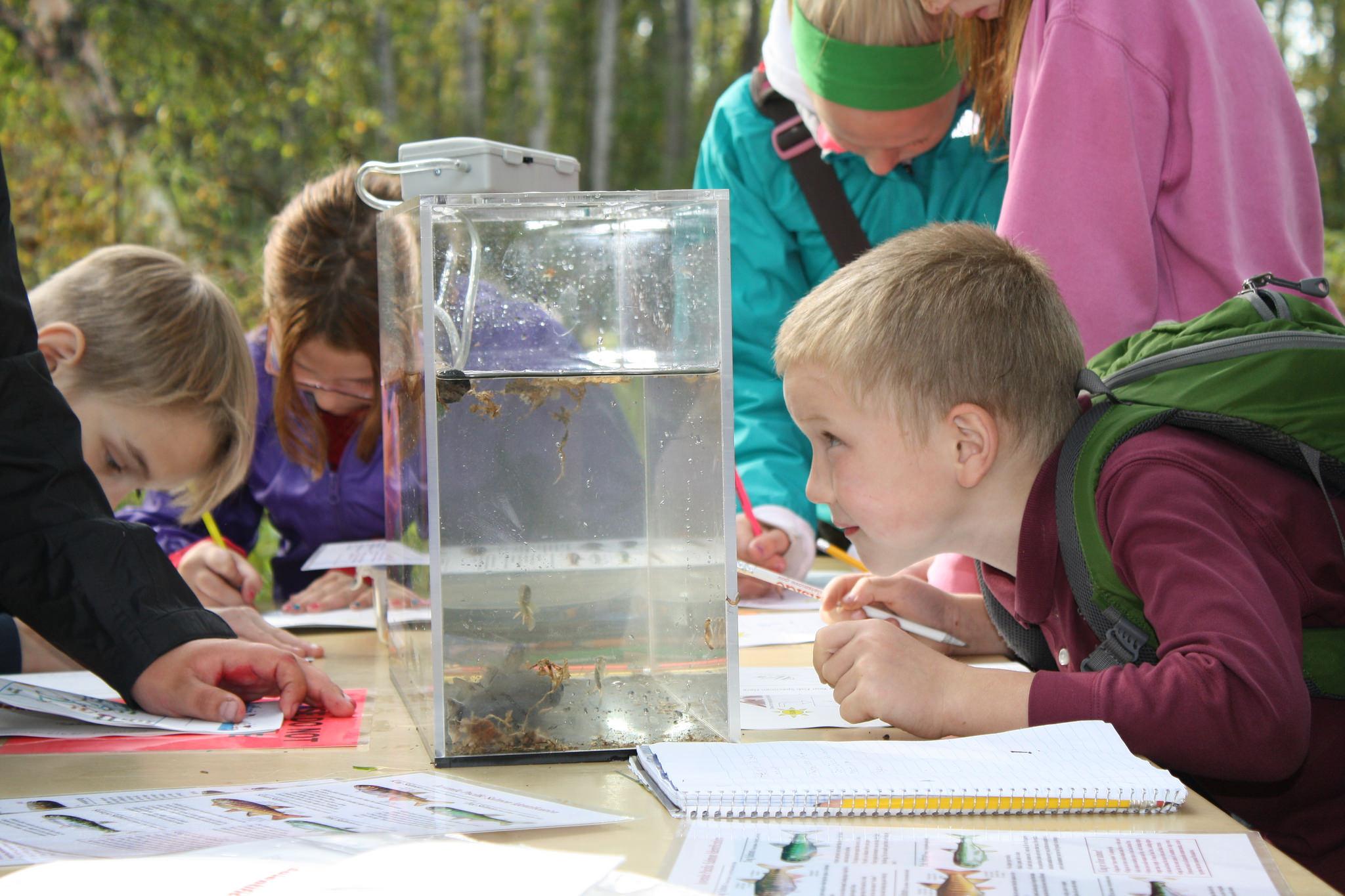 Young boy investigates aquatics, BLM photo