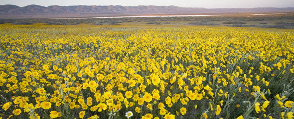 Wildflowers blanket a valley with a lake in the center and mountains in the background. (Bob Wick/BLM)