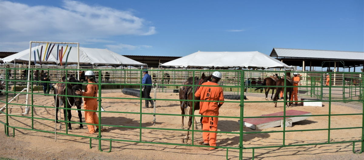 inmates dressed in orange lead horses inside a green fenced corral