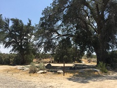 Campsite with picnic table under a large tree. Photo by Alexia Williams, BLM.