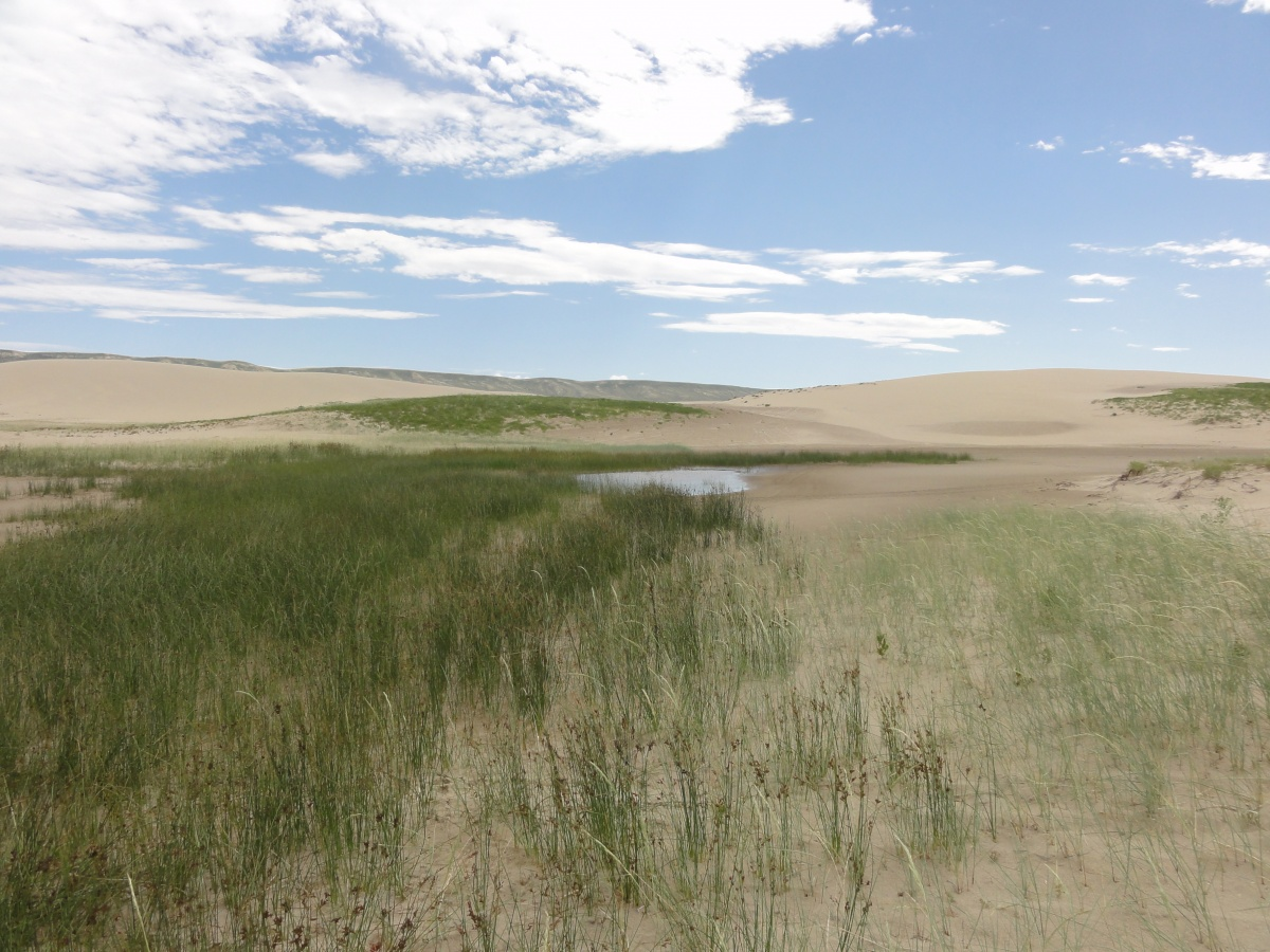 A grassy area and small pond are in the sand dunes.