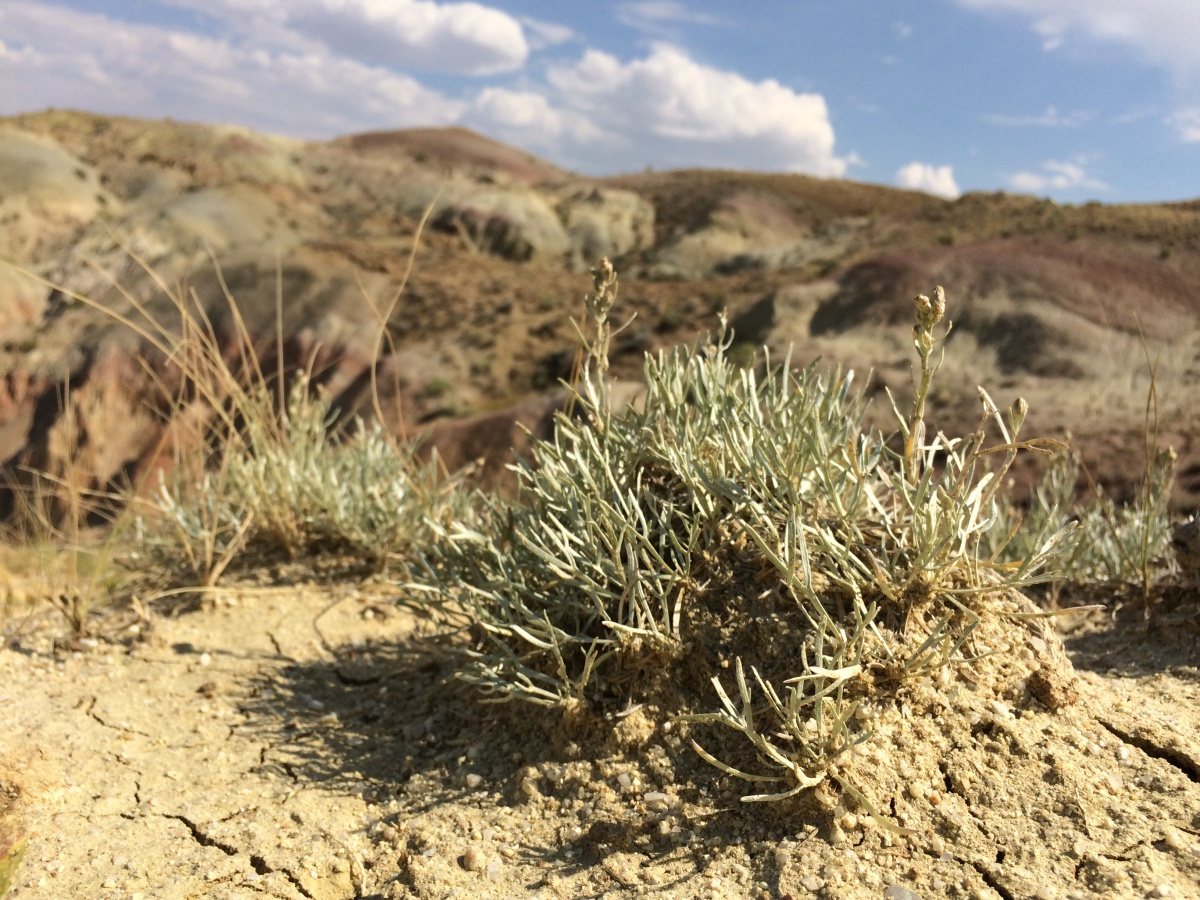 A light green, spiny-leaved bush grows up out of a dirt mound.
