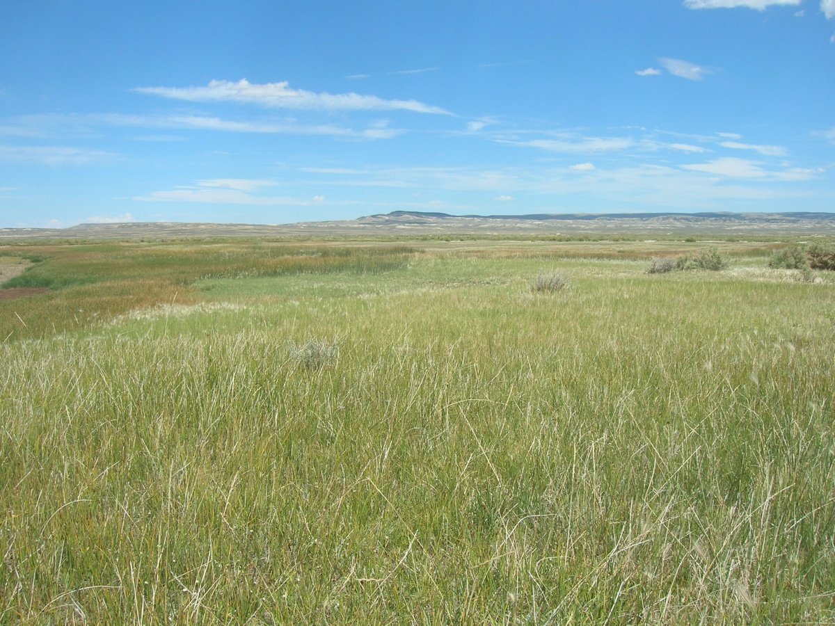 An expansive prairie with light green grass growing all the way to the horizon.