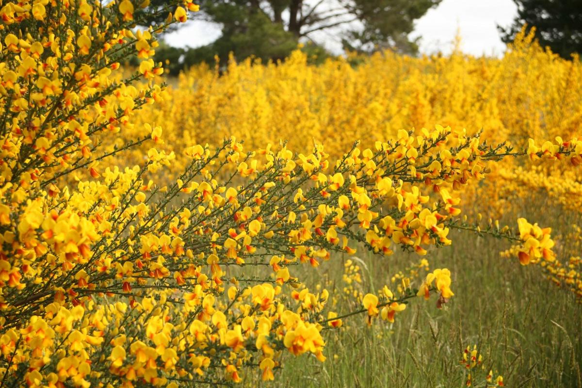California Weeds And Invasives Program Bureau Of Land Management