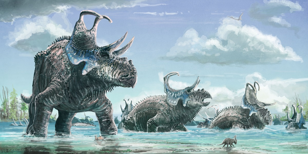 An artist's depiction of Machairoceratops cronusi.