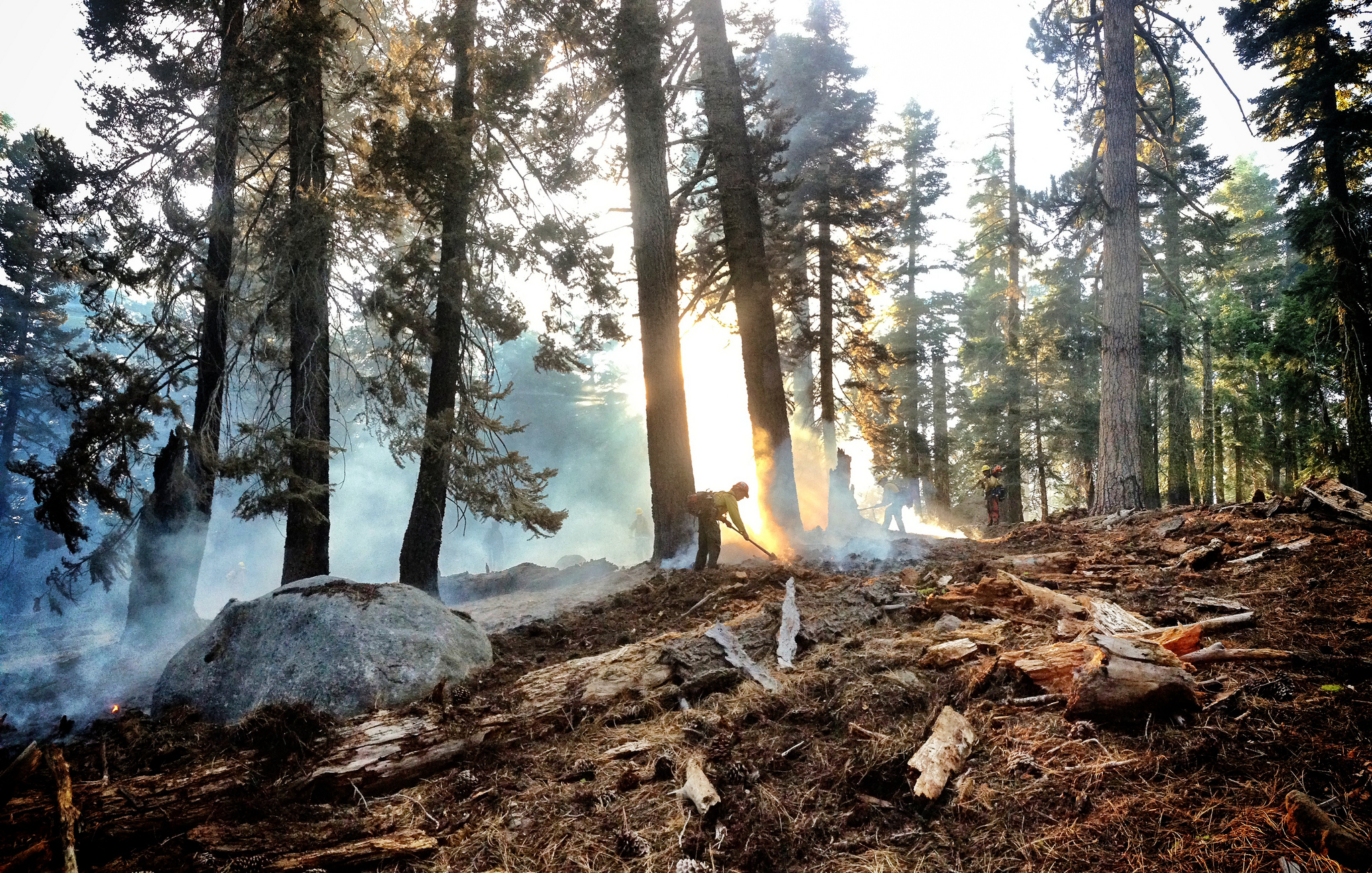 A wildland firefighter works on a small fire in a Forest.