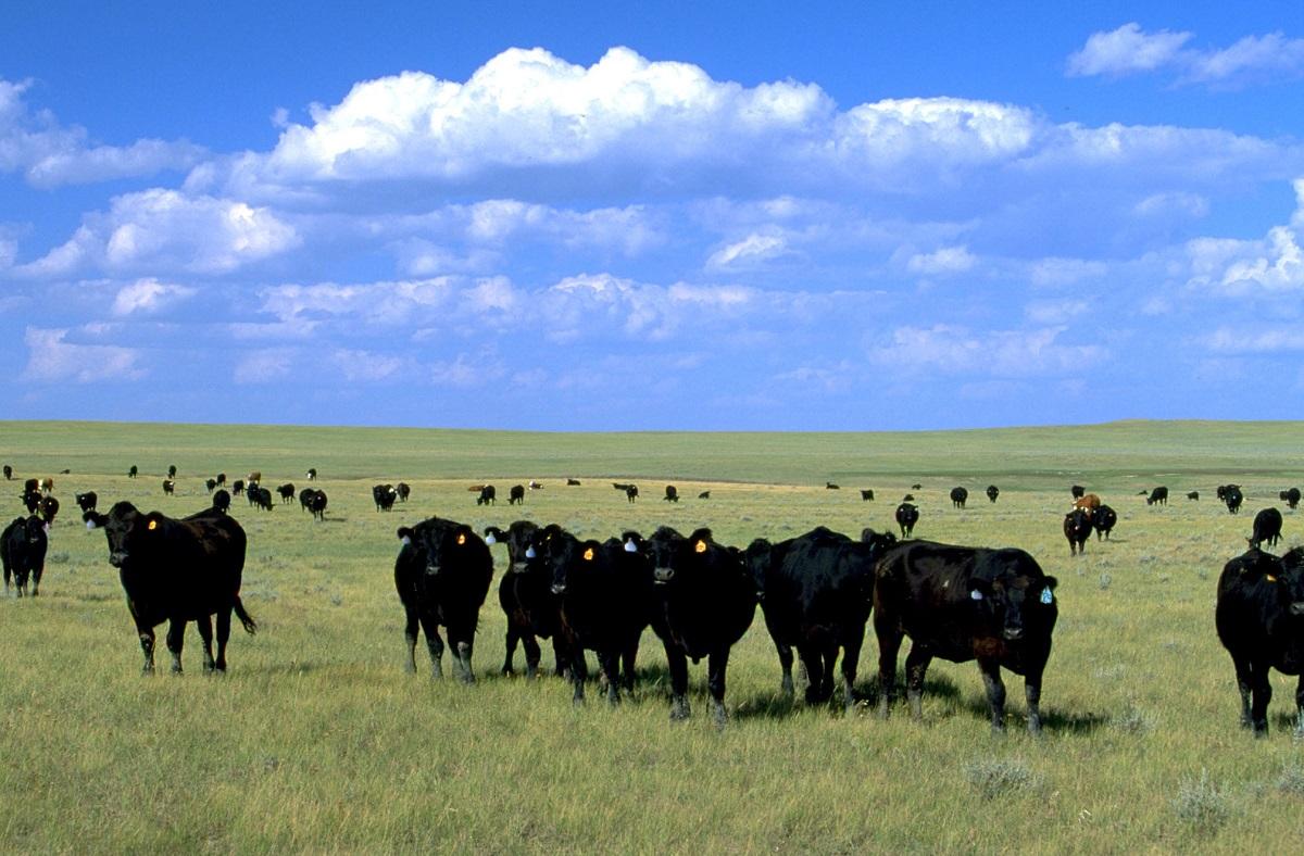 Montana Dakotas Bureau Of Land Management