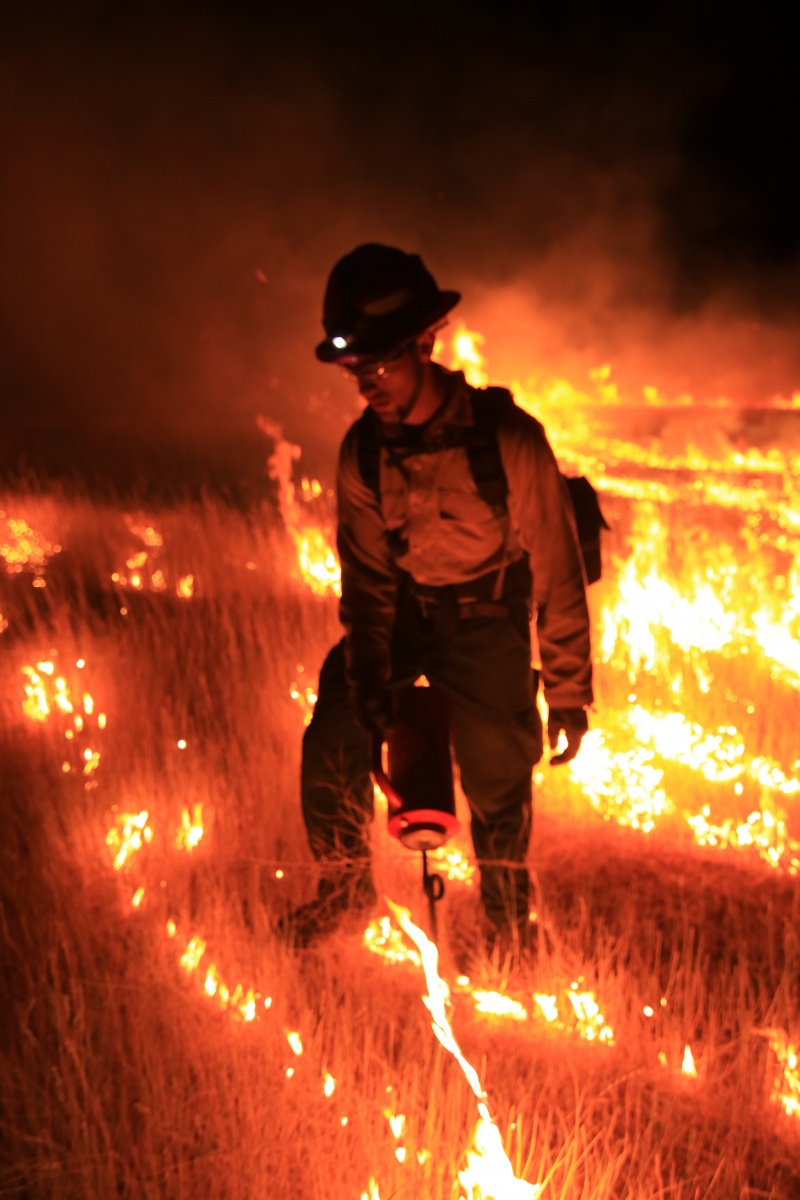 BLM firefighters ignite a prescribed fire at night. Credit: BLM