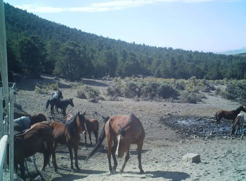 Horses gathered around a drying spring.