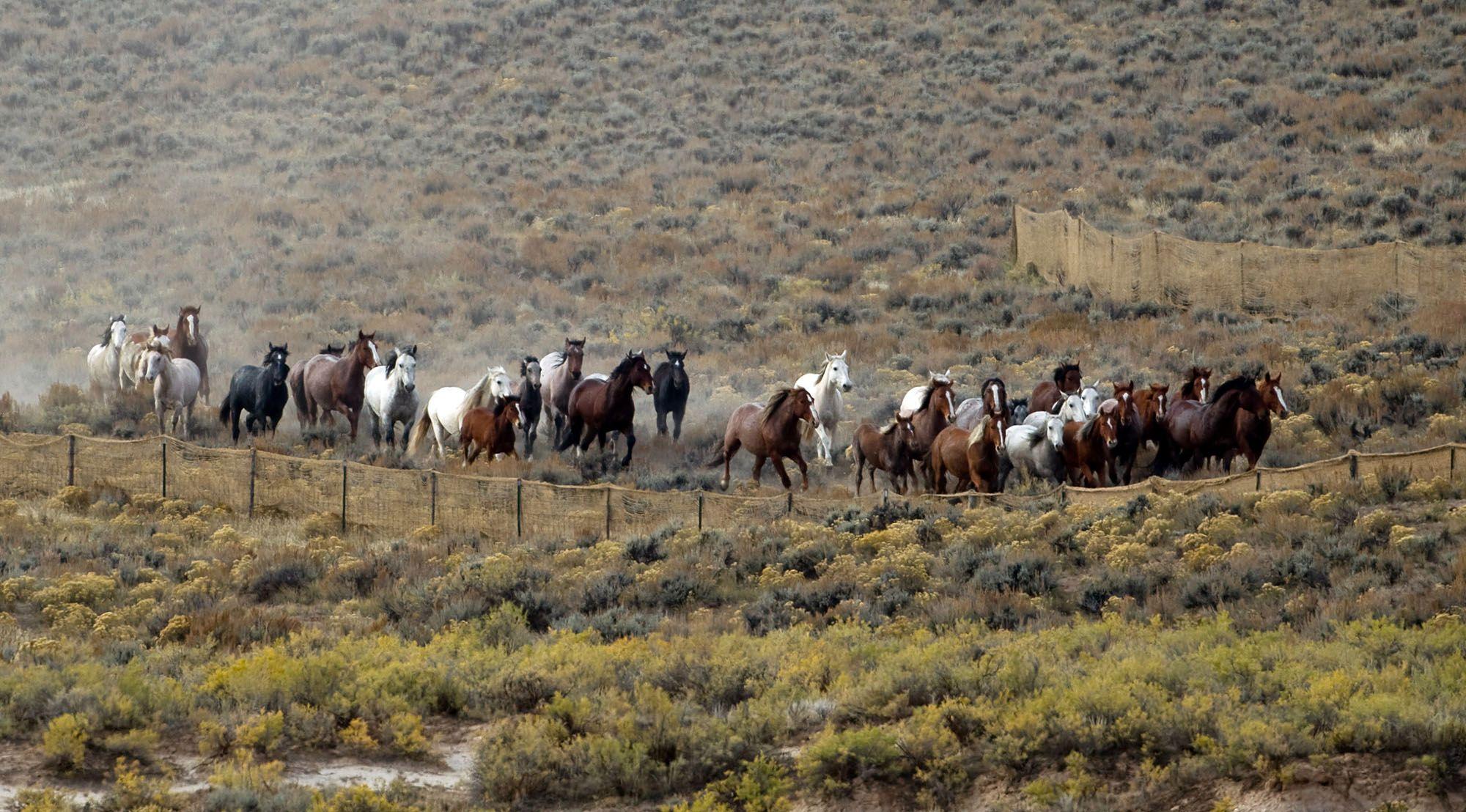 Horses running on a field.