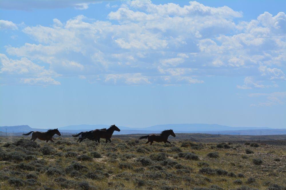 Three horses running on range