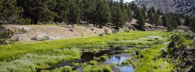 Sierra Club v. Watt - Environmental Law Reporter