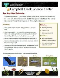 Eye Spy Bird Behavior Nature Learning Activity Sheet