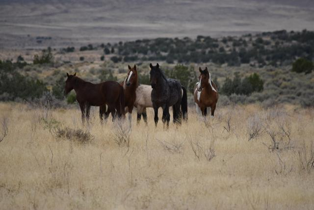 Four horses standing together in a brown grassy field with the range behind them.