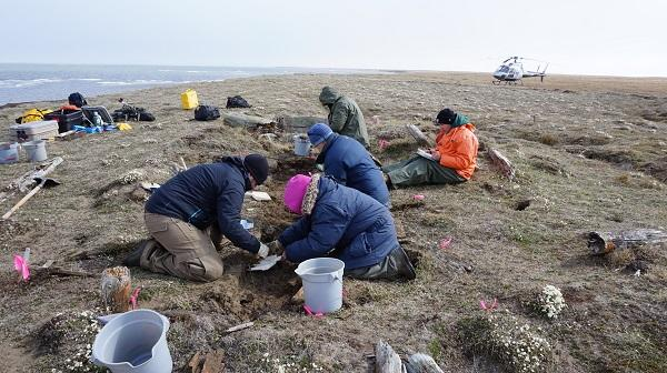 A group of people work to excavate a historic Inupiaq home site along the arctic coast