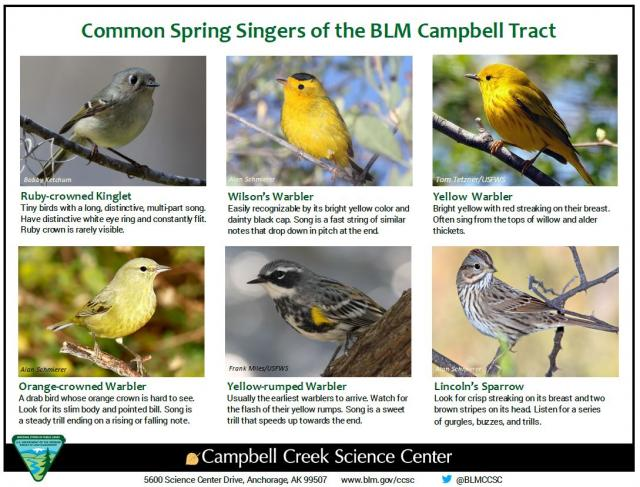 Common Spring Singers of the BLM Campbell Tract sheet