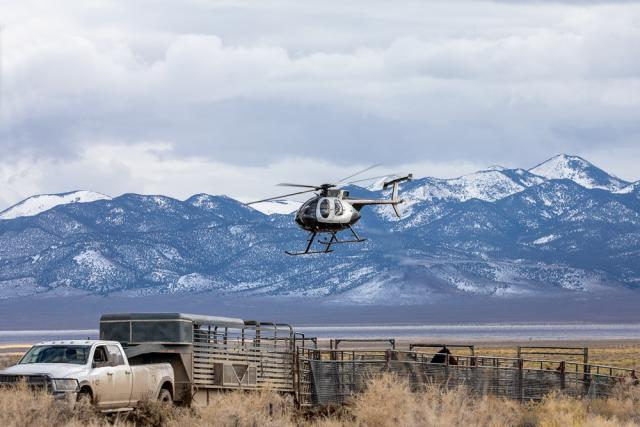 A helicopter over a wild horse trap.