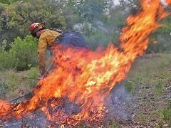 A pile of brush burns under the supervision of a fire fighter. Photo by BLM.
