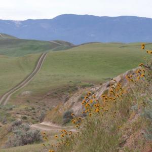 A road runs through Turney Hills in California with yellow flowers and brown grasses.Photo by BLM.
