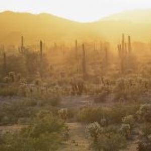 Sonoran Desert Sunrise