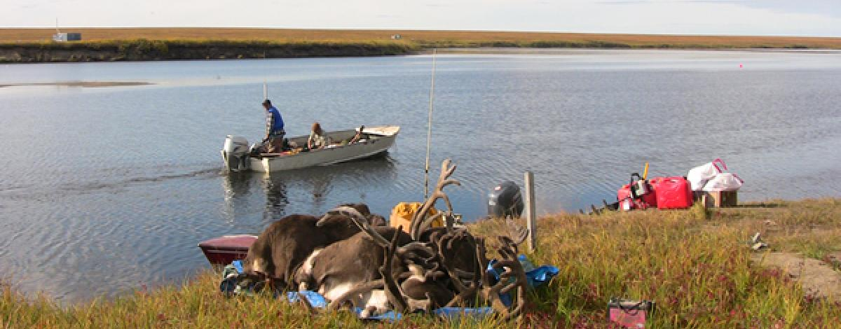 Caribou carcass and meat along with pile of gear waiting to be picked up by approaching hunters in a boat on the river