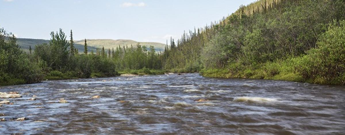 Birch Creek Wild and Scenic River lined with spruce trees.