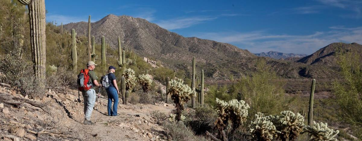 Two hikers on a gravel trail surrounded by saguaro and cholla with mountains in the background