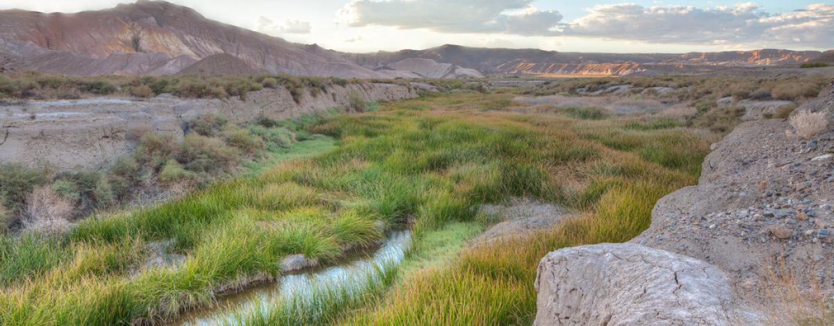 Lush green grass grows near a river in a desert area.  Photo by Bob Wick, BLM.