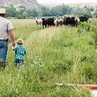A man and child are holding hand in a field facing a small herd of cows little a creek