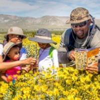 A family of four examining flowers and reading a trail guide in a field of yellow flowers.