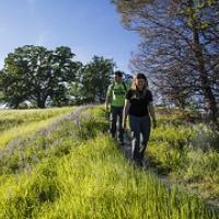 Two hikers at Berryessa Snow Mountain National Monument walk a verdant trail bordered by oaks. Photo by Bob Wick, BLM.